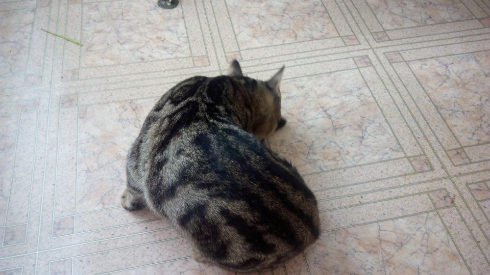 Кот начал писать где попало что делать