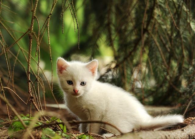 Как назвать белого кота