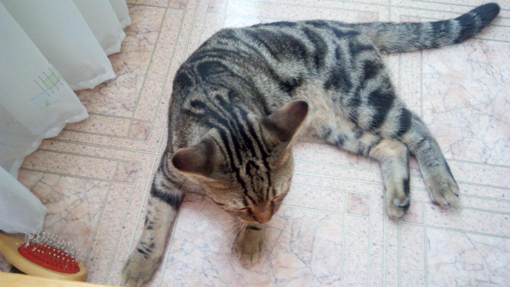 Варианты где можно оставить кошку на время отпуска