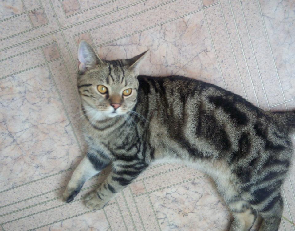 Сколько лет кошке по человеческим меркам