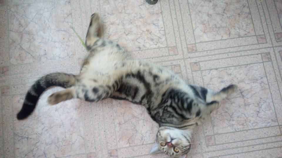 Как кошачья мята действует на кошек