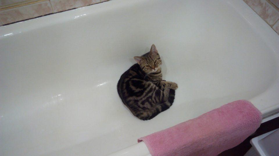 Можно ли мыть кота обычным шампунем