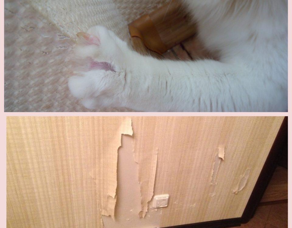 Кот дерет обои что делать