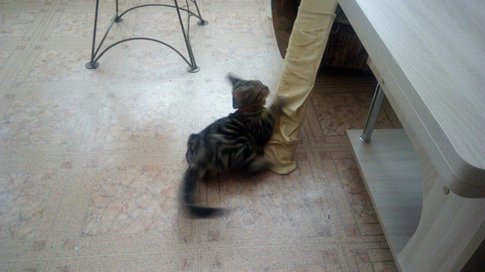Как приучить кошку к когтеточке