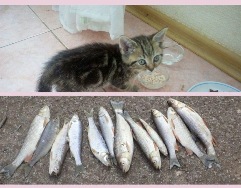 Почему котам нельзя рыбу