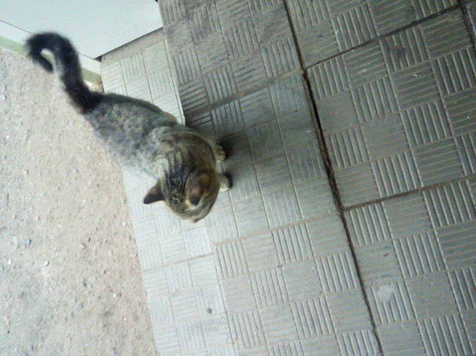 куда сдать бездомную кошку