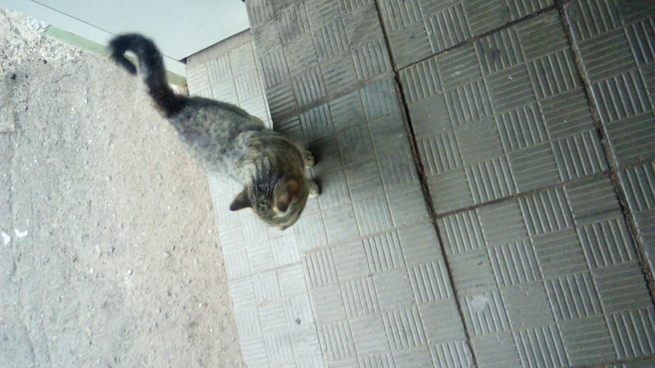 Как отдать кошку в приют, если она не нужна, куда пристроить котят