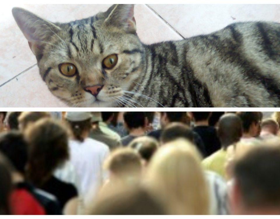 Как видят кошки цвета и людей