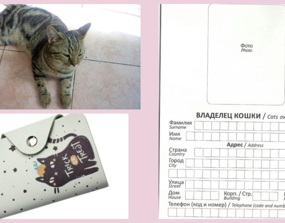 Как сделать паспорт коту