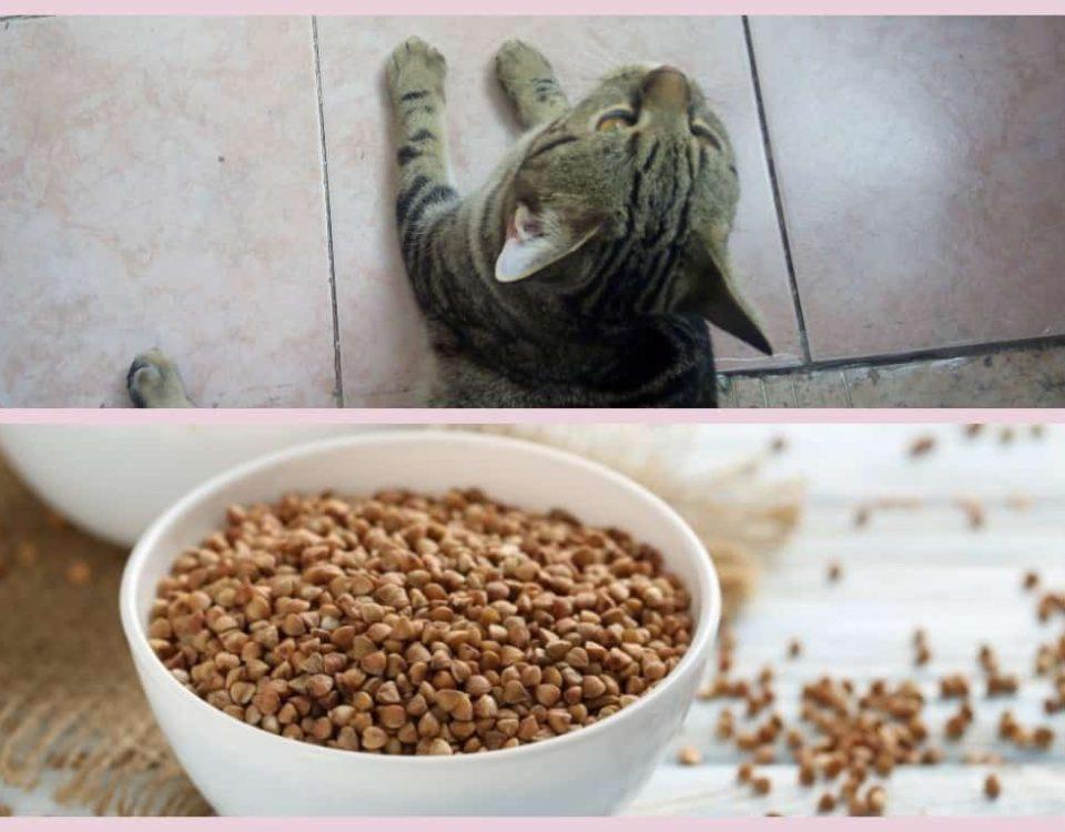 Какие каши можно кошкам