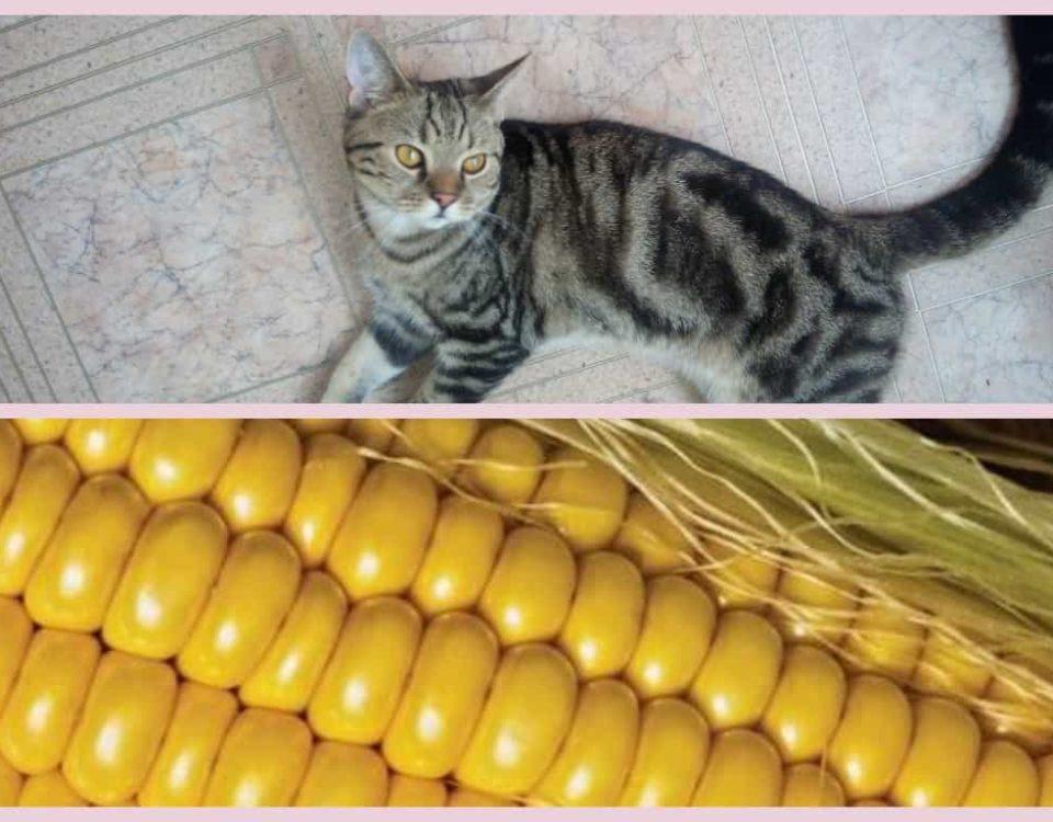Можно ли кошкам кукурузу