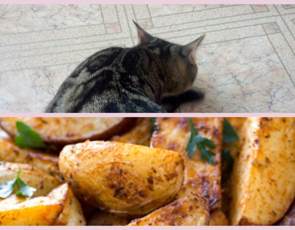 можно ли кошкам картошку?