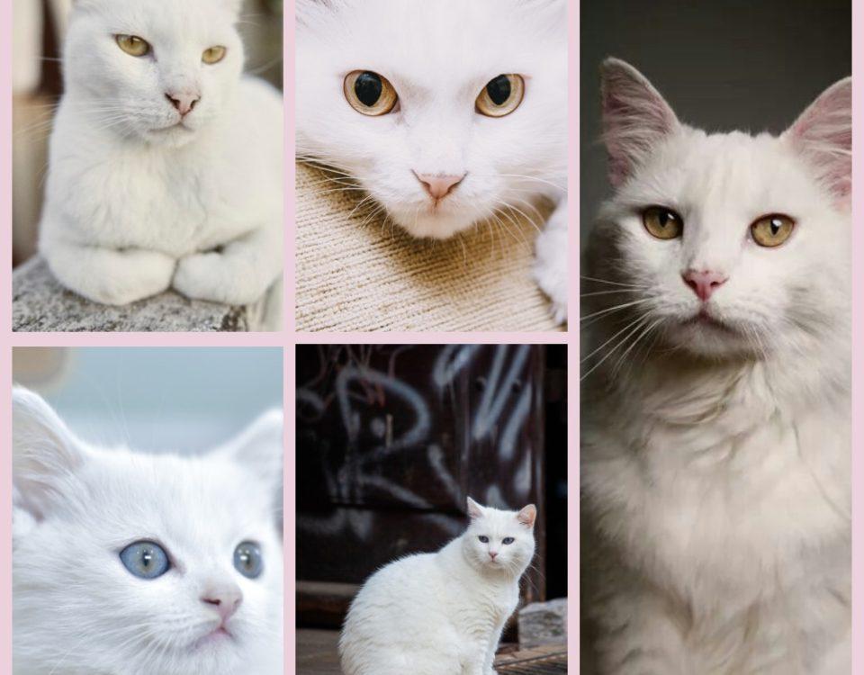 Почему белые кошки глухие
