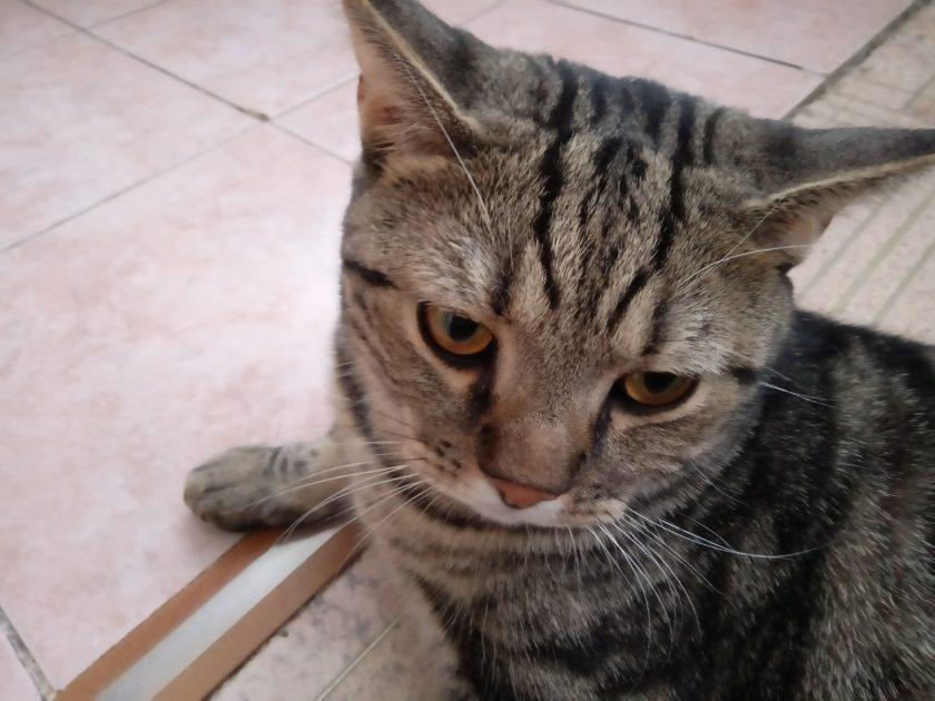 Почему у кота пропал голос