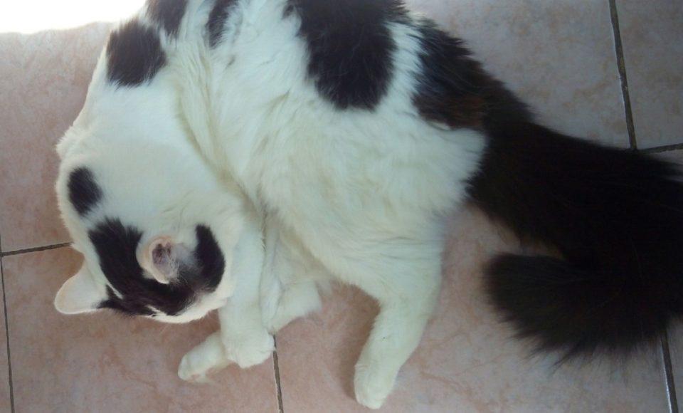 Кошка проглотила иголку с ниткой что делать