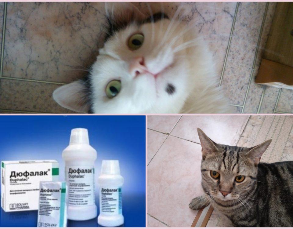 Как давать Дюфалак кошке