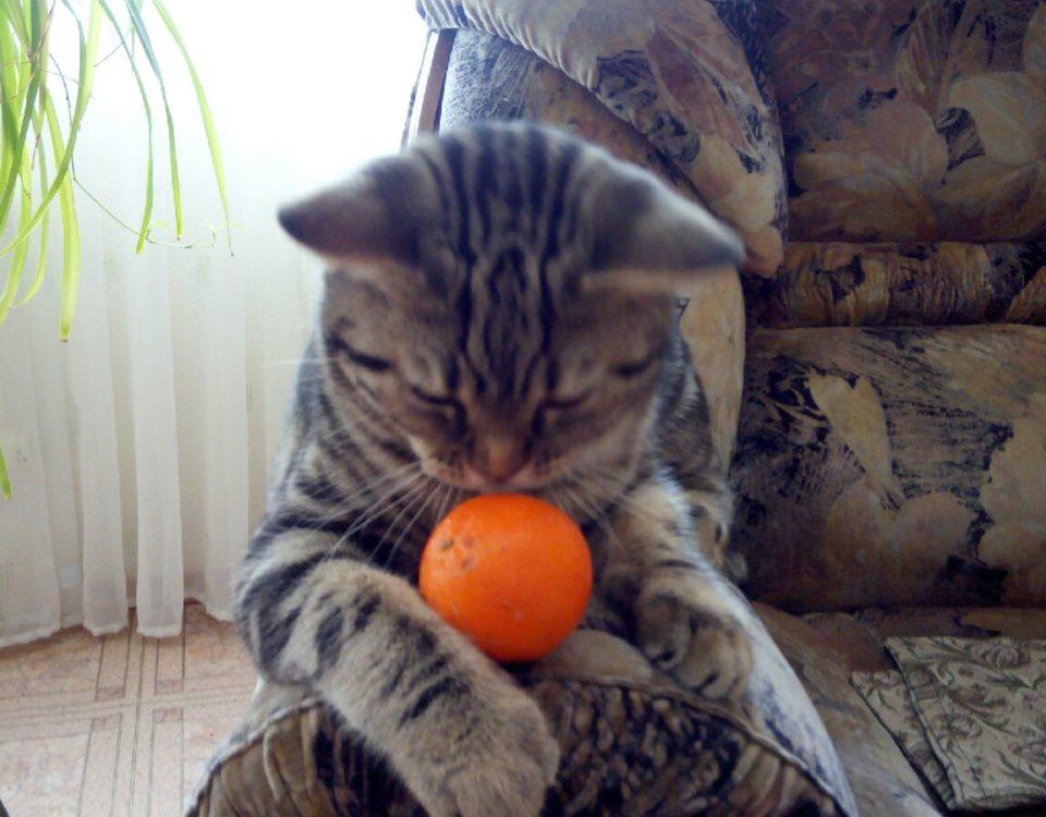 Почему коты боятся мандаринов?