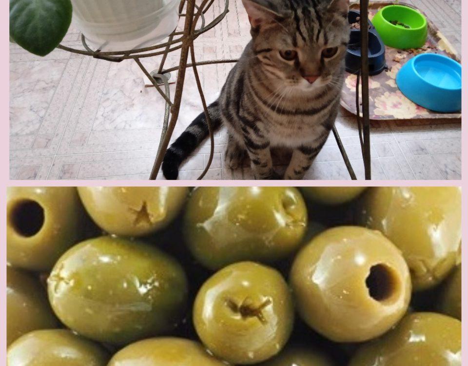 Почему кошки любят оливки и маслины