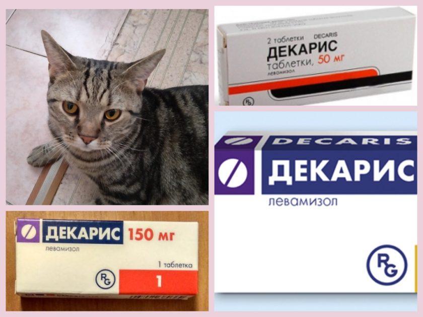 Можно ли Декарис кошкам