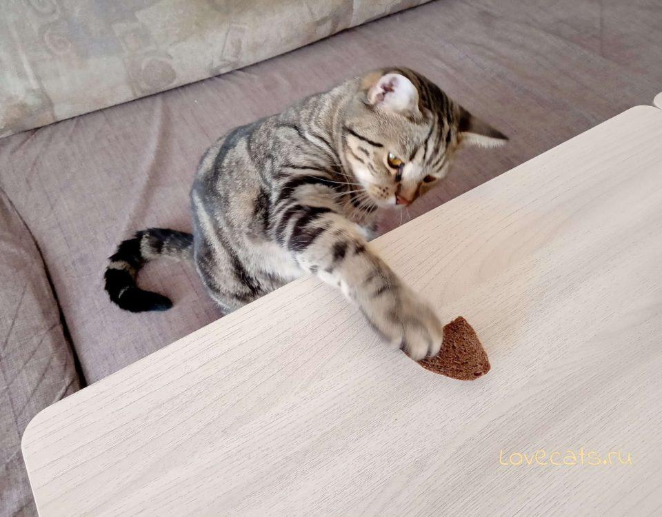 Можно ли кормить кошку хлебом