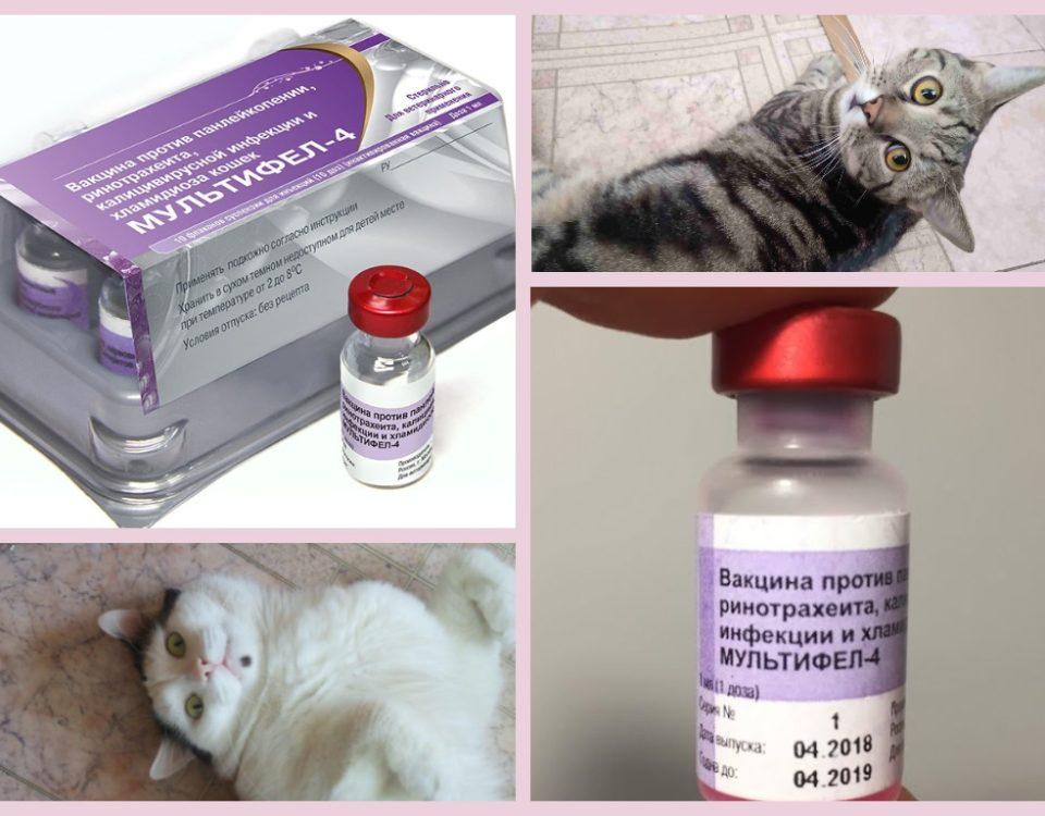 Мультифел 4 для кошек для чего