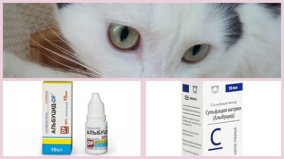 Можно ли кошкам капать в глаза Альбуцид