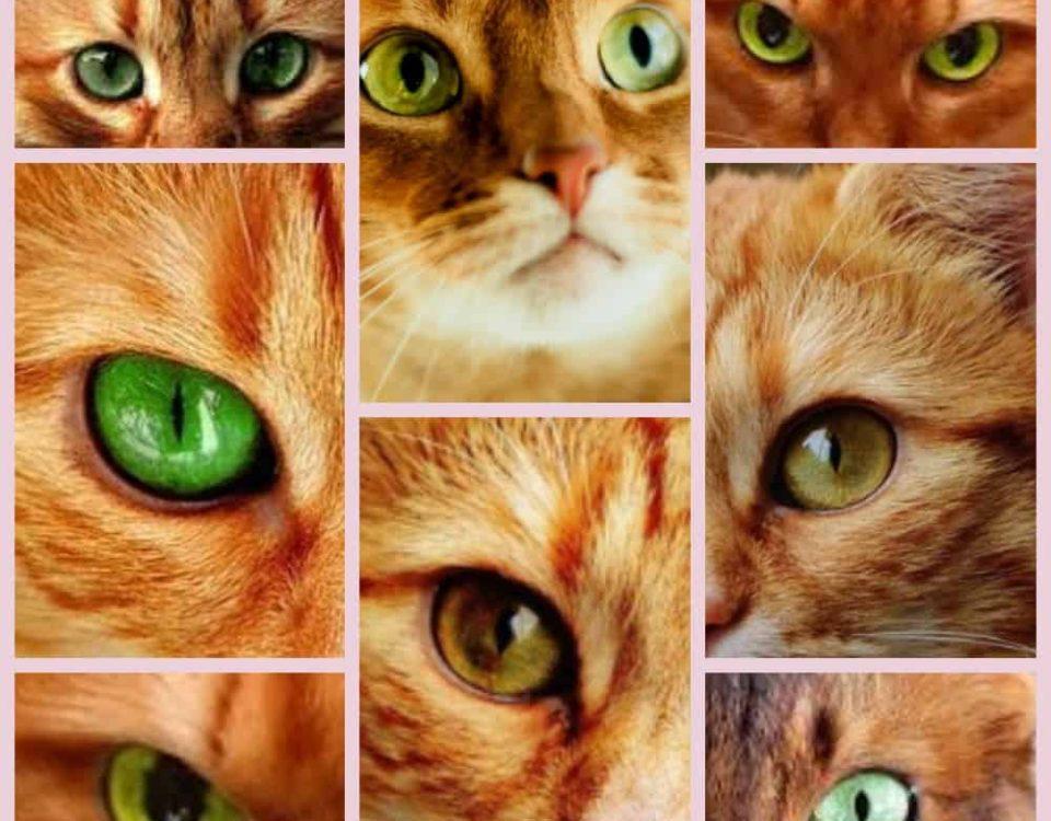 Рыжая кошка с зелеными глазами какая порода