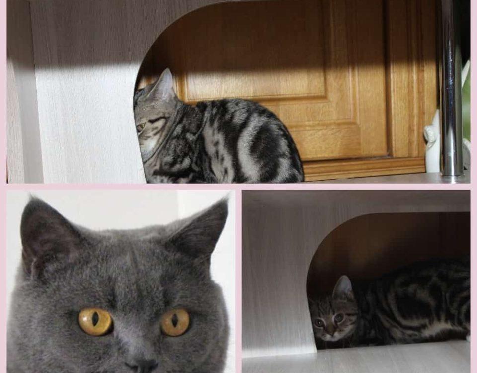 Клички для котов мальчиков британской породы
