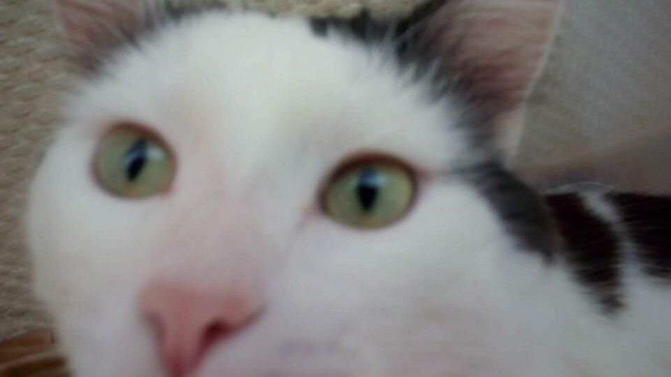 Глазные болезни кошек