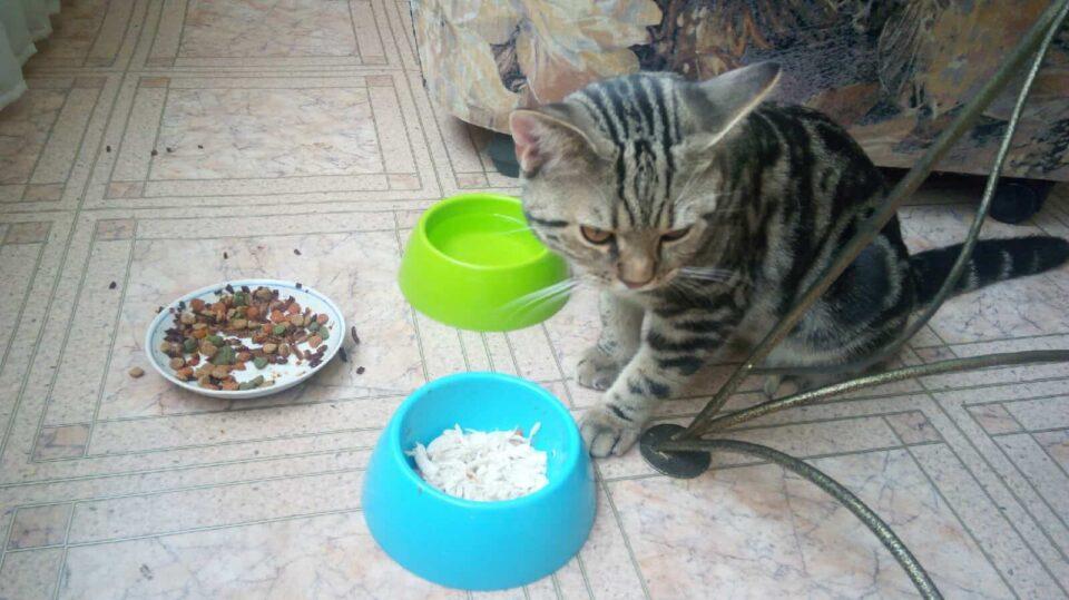 Почему кошка худеет но ест хорошо