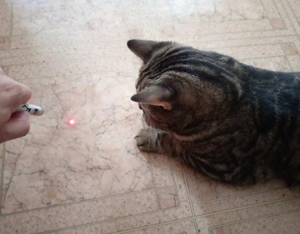 Можно ли играть лазерной указкой с кошкой